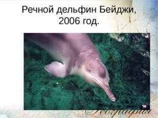 Речной дельфин Бейджи, 2006 год.
