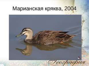 Марианская кряква, 2004