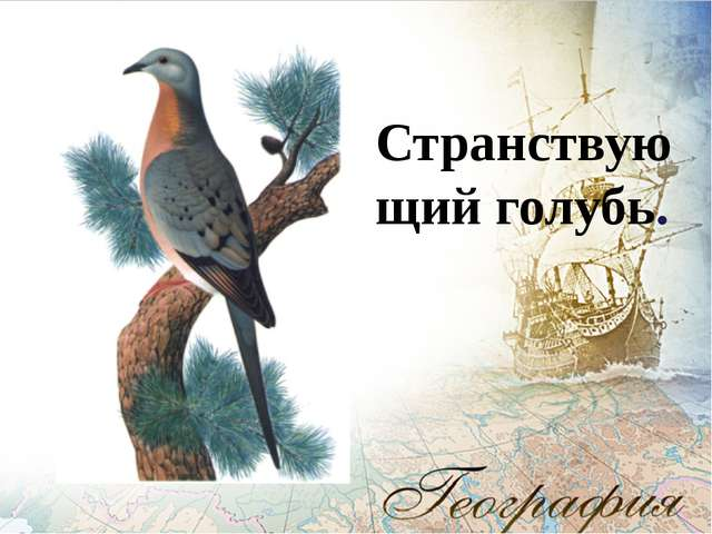 Странствующий голубь.