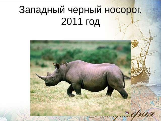 Западный черный носорог, 2011 год