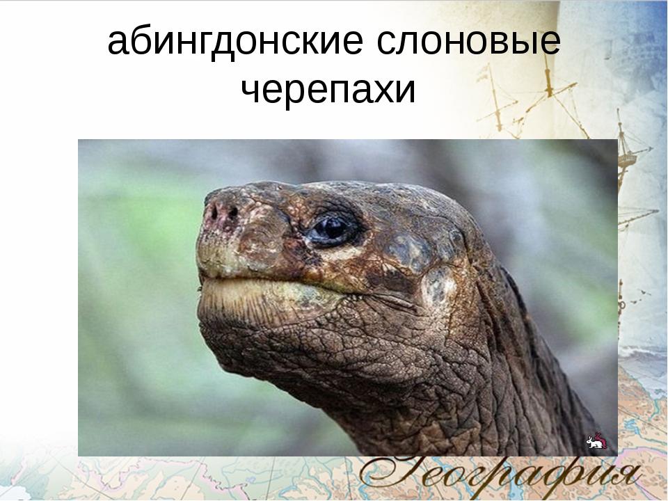 абингдонские слоновые черепахи