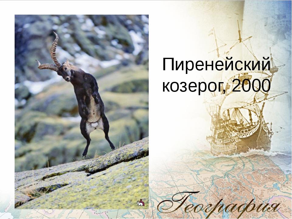 Пиренейский козерог, 2000