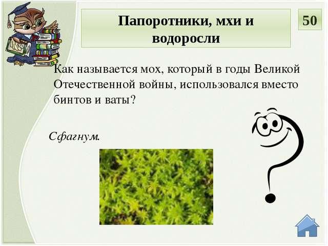 Птицемлечник дуговидный Узнай растение. Красная книга России 10