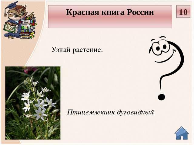 Кубышка жёлтая Узнай растение. Красная книга России 20