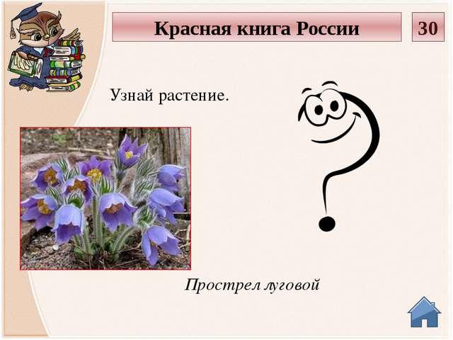 Венерин башмачок Узнай растение. Красная книга России 40