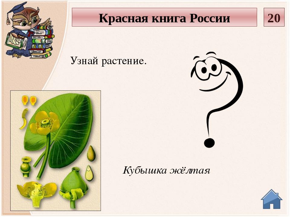 Прострел луговой Узнай растение. Красная книга России 30