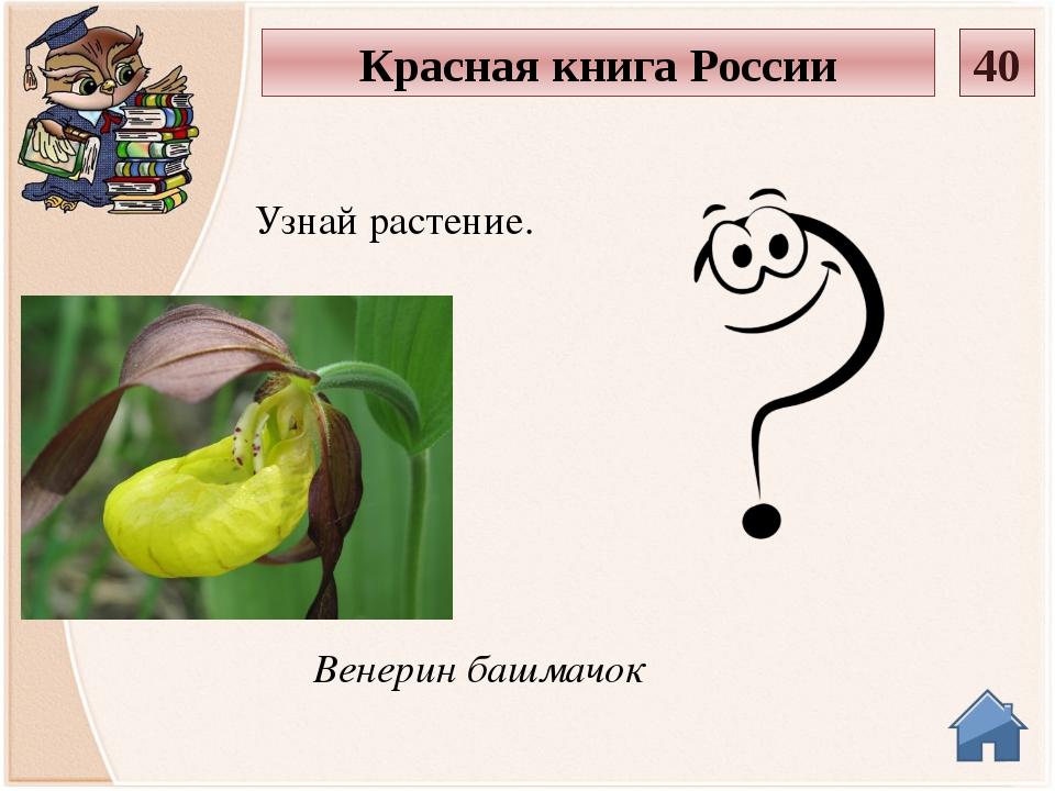 Лютик саянский Узнай растение. Красная книга России 50
