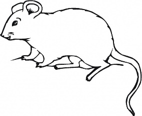mouse animal drawing image search results