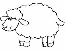 Овцы .Тонкорунные породы. Шерстные.