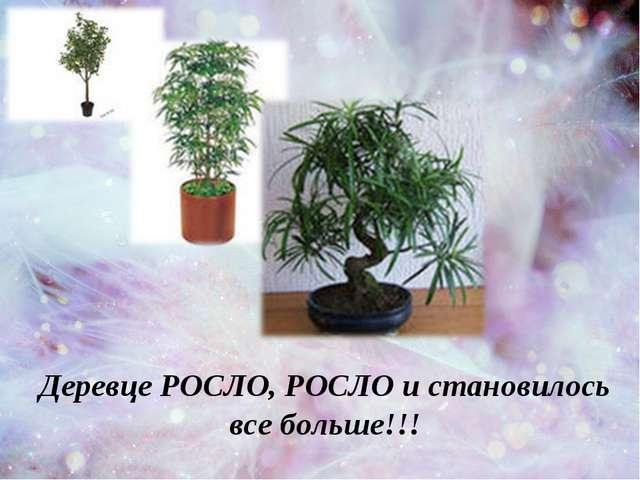 Деревце РОСЛО, РОСЛО и становилось все больше!!!