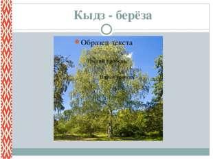 Кыдз - берёза