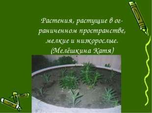 Растения, растущие в ог- раниченном пространстве, мелкие и низкорослые. (Мелё