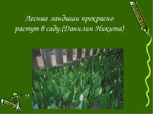 Лесные ландыши прекрасно растут в саду.(Данилин Никита)