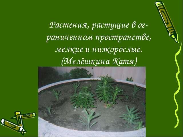 Растения, растущие в ог- раниченном пространстве, мелкие и низкорослые. (Мелё...