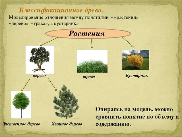 Классификационное древо. Моделирование отношения между понятиями - «растения»...