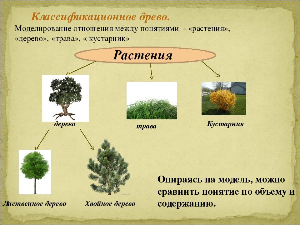 растения это понятие для детей быстрой разрядки