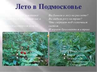 Лето в Подмосковье Запах ароматной земляники Летним днем встречает нас в лесу