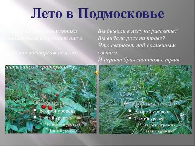 Лето в Подмосковье Запах ароматной земляники Летним днем встречает нас в лесу...