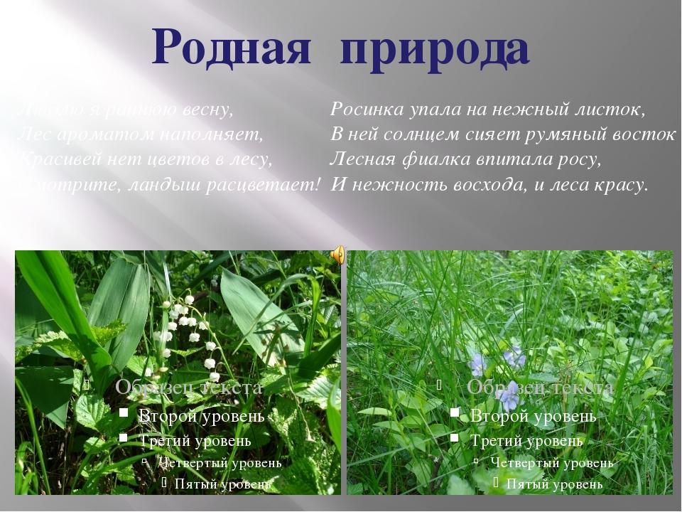 Родная природа Люблю я раннюю весну, Лес ароматом наполняет, Красивей нет цве...