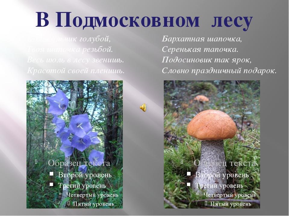 В Подмосковном лесу Колокольчик голубой, Твоя шапочка резьбой. Весь июль в ле...