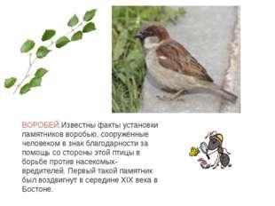 ВОРОБЕЙ.Известны факты установки памятников воробью, сооружённые человеком в