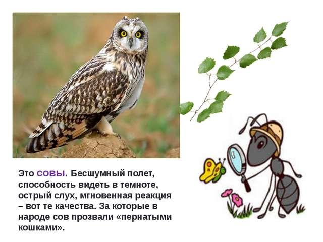 Это совы. Бесшумный полет, способность видеть в темноте, острый слух, мгновен...