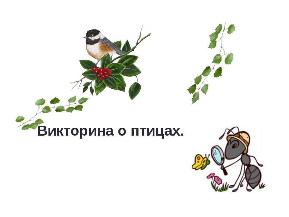 Викторина о птицах.