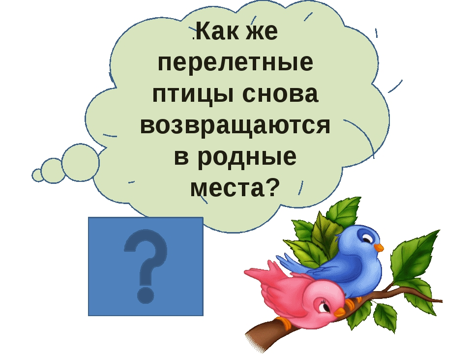 .Как же перелетные птицы снова возвращаются в родные места?