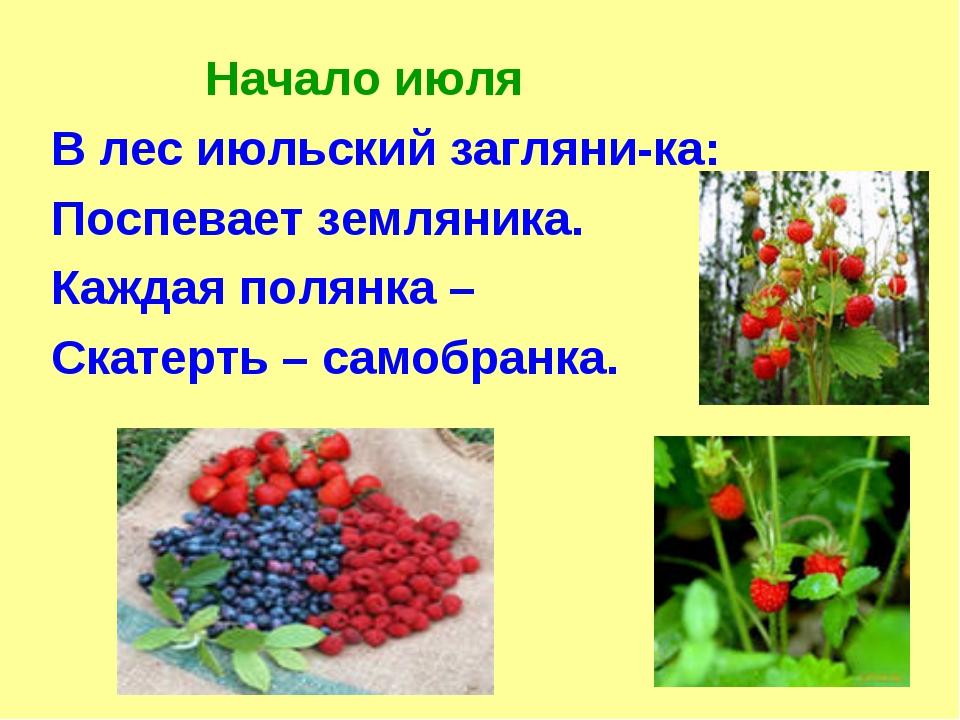Начало июля В лес июльский загляни-ка: Поспевает земляника. Каждая полянка –...