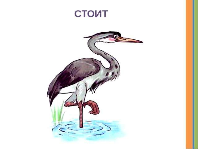 СТОИТ