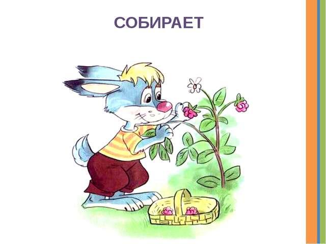 СОБИРАЕТ