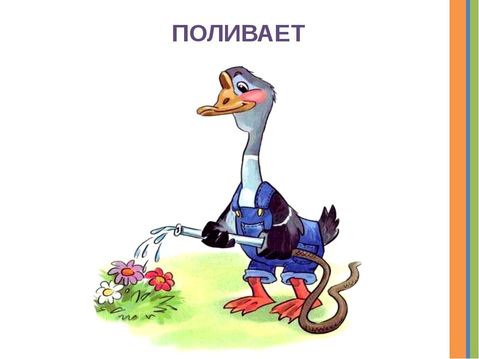 ПОЛИВАЕТ