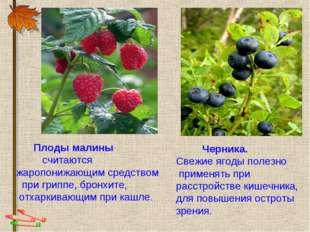 Плоды малины считаются жаропонижающим средством при гриппе, бронхите, отхарк