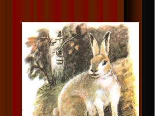 Детеныш зайца-зайч…нок