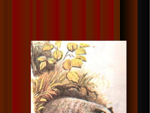 Зверёк высунул из травы мокрый нос, похожий на свиной пятач…к, нюхает воздух,...