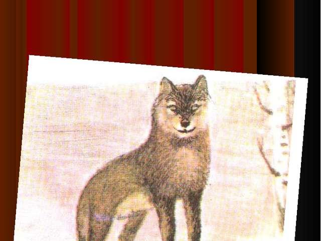 Детеныш волка-волч…нок
