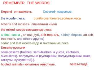 Depend on-зависеть, the woods- леса, Covered- покрытые, coniferous forests-хв