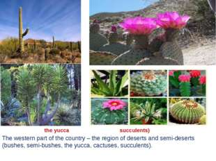 The western part of the country – the region of deserts and semi-deserts (bus
