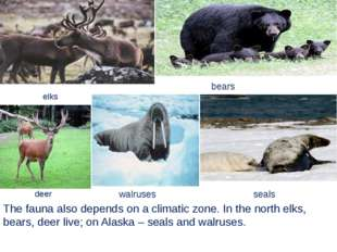 The fauna also depends on a climatic zone. In the north elks, bears, deer liv