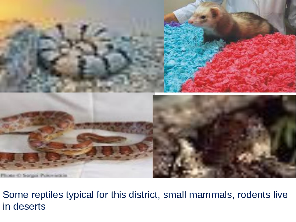 Some reptiles typical for this district, small mammals, rodents live in deserts