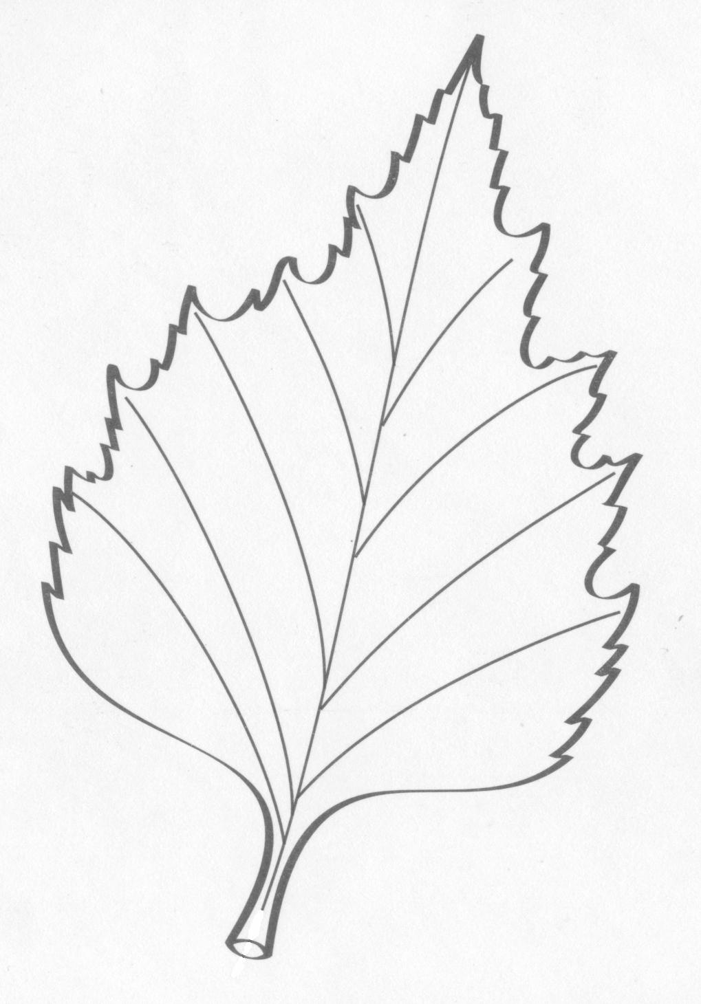 этого раскраска листья березы распечатать этому дню