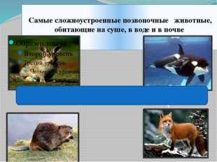Самые сложноустроенные позвоночные животные, обитающие на суше, в воде и в п