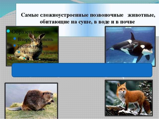 Самые сложноустроенные позвоночные животные, обитающие на суше, в воде и в п...