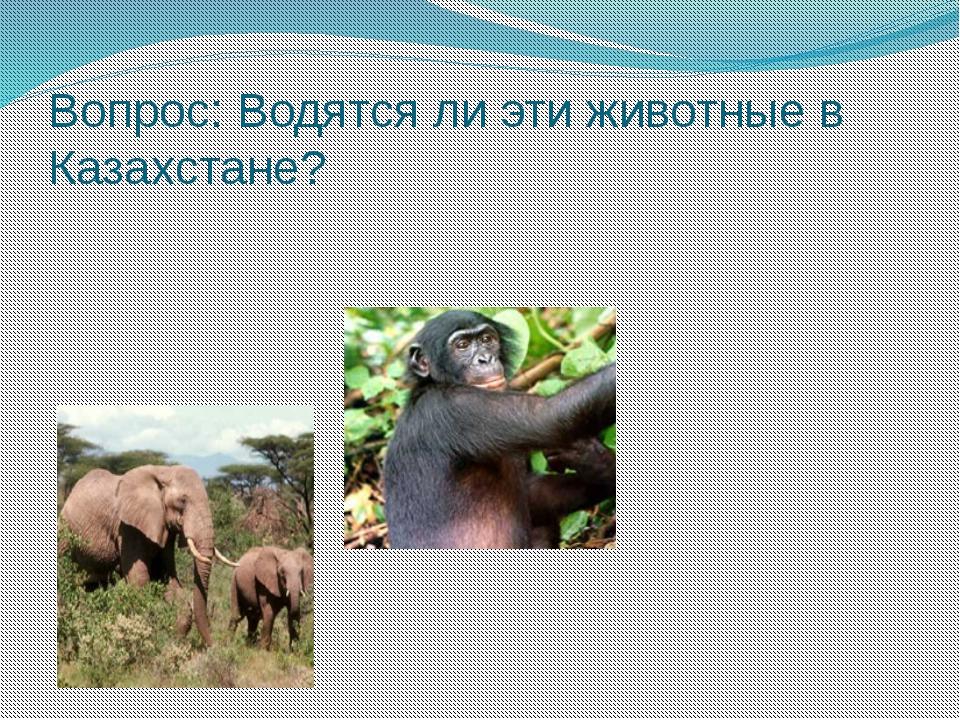 Вопрос: Водятся ли эти животные в Казахстане?