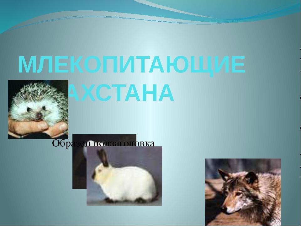 МЛЕКОПИТАЮЩИЕ КАЗАХСТАНА