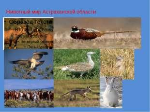 Животный мир Астраханской области