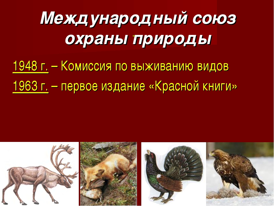 Международный союз охраны природы 1948 г. – Комиссия по выживанию видов 1963...