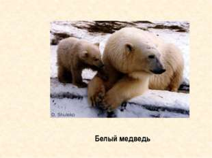 Знахари готовили из частей его тела лекарства от слабости и трусости Медведь