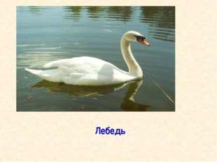Домашнее задание 1. Прочитать статью « Охрана животных» 2. Оформить книжку- м