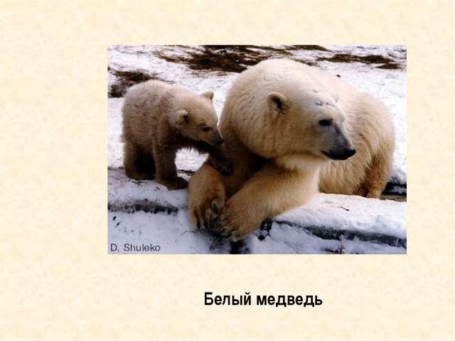 Знахари готовили из частей его тела лекарства от слабости и трусости Медведь...